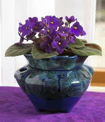 25 Easy Houseplants Easy To by 29 Most Beautiful Houseplants You Never Knew About Balcony