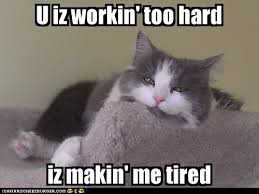 Tired Cat Meme - lolcats stress lol at funny cat memes funny cat pictures