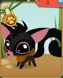 pet sugar glider animal jam wiki fandom powered by wikia
