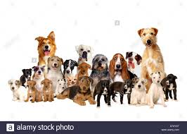 a collection of dogs stock photo royalty free image 6732518 alamy