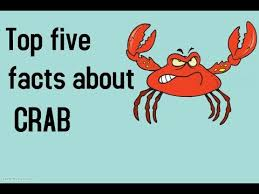 top five facts about crab keep quiete animal