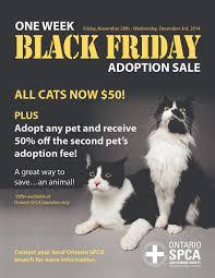humane society black friday black friday adoption sale blog