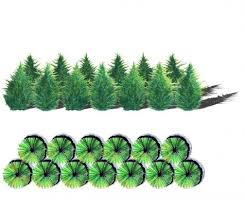 buy leyland cypress trees free shipping 79 99