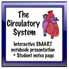 functions of the circulatory system you u0027ve always wanted to know