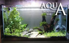 cuisine aquascaping lab tutorial minimal and natural rich mix