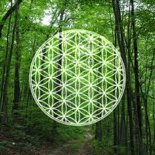 Trees And Their Meanings 7 Common Spiritual Symbols And Their Meaning Humans Are Free