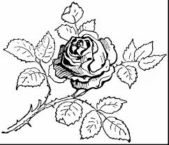 incredible butterfly and flower coloring pages with roses coloring