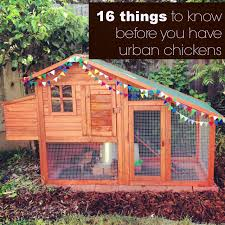 16 things to know before you have urban chickens life rearranged