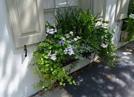 37 best window box ideas images on pinterest window boxes