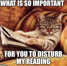 Reading Meme - reading cat imgflip