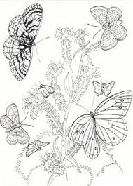 free printable cat coloring pages kids coloring pages