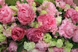 Peony Floral Arrangement by Big Pink Peonies In A Wedding Flower Arrangement Stock Photo