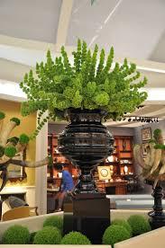 native plants of ireland 131 best bells of ireland wedding images on pinterest flower
