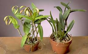 plants that don t need sunlight to grow orchids 101