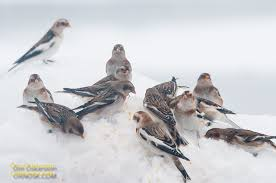 winter ornosk u2013 birds landscape weather