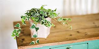 plants at home these best and easiest indoor houseplants that won t die on you
