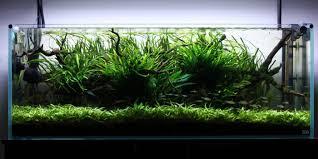 Best Substrate For Aquascaping Top 5 Best Aquarium Plants For Aquascaping Aquatic Mag