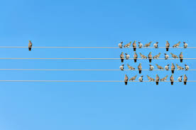 guidelines in writing a reaction paper apa style blog individuality concept birds on a wire 503081960 1261x835