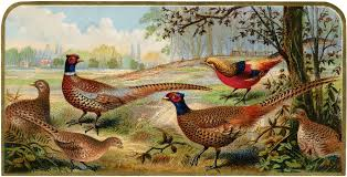 vintage pheasants image nice for fall projects the graphics fairy