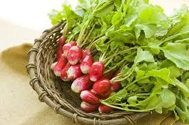 cuisiner des radis cultiver et cuisiner le radis pleine vie