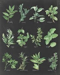 herb chart herb chart on black fine art print by chris paschke at
