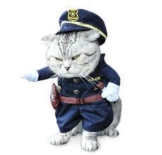 cat costume cat costume meowingtons