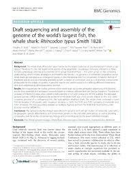 am agement petit bureau movements of whale sharks rhincodon pdf available