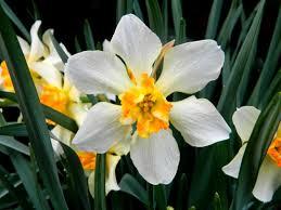 virginia spring flowers home garden life