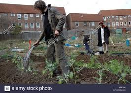 preparing soil and planting vegetables in inner city urban garden
