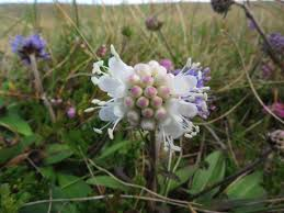 native scottish plants news and bulletin board