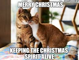 Merry Christmas Cat Meme - 50 best funny christmas memes happy wishes