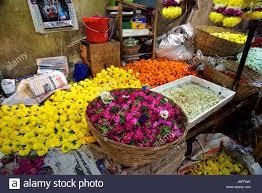india mums flower stock photos u0026 india mums flower stock images