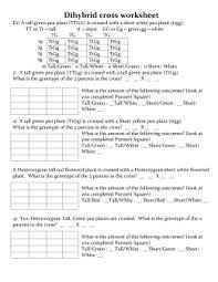 Dihybrid Cross Punnett Square Worksheet Dihybrid Cross Ws Highmark Charter