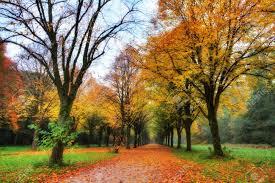 beautiful colored trees in het amsterdamse bos amsterdam wood