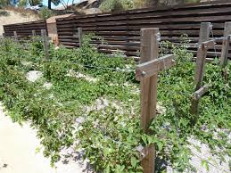 gidget u0027s garden i u0027m going to be an urban plantations intern