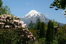 native plants new zealand taranaki gardens of significance tourism new zealand media