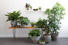 tropical house plants with design ideas 49529 iepbolt