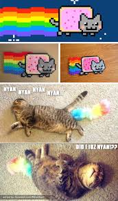 Nyan Cat Meme - real life nyan cat meow aum