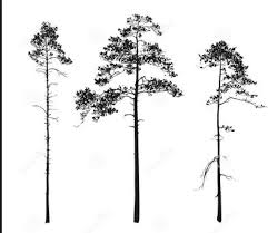 best 25 pine tree silhouette ideas on pinterest forest