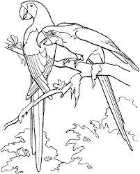 parrot bird coloring pages bird coloring page parrot free two