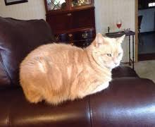 Creature Comforts Pet Sitting Creature Comforts Pet Sitting U0026 Services Pet Care Quad Cities