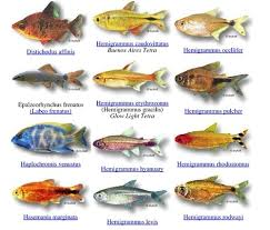 types of fish search projecct fish