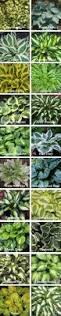 very helpful in choosing plants for landscaping these beautiful