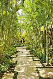 best 25 bamboo garden ideas on pinterest bamboo screening best 25 bamboo garden ideas on pinterest bamboo screening bamboo screen garden and bamboo planter