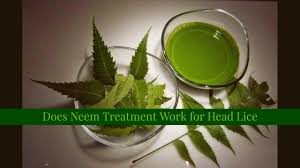 does neem treatment work for head lice