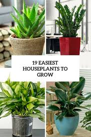houseplants 19 easiest houseplants you can grow without care gardenoholic
