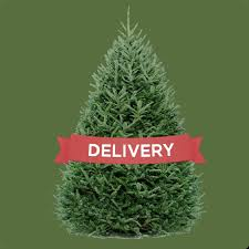 christmas tree delivery dc tree delivery the best christmas trees in dc delivered