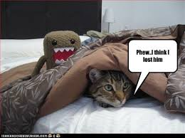 Lost Cat Meme - phew i think i lost him i can has cheezburger funny cats cat
