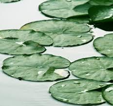 Floating Solar Pond Lights - pond lights