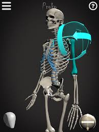 poseable skeleton skelly poseable anatomy model android apps on play